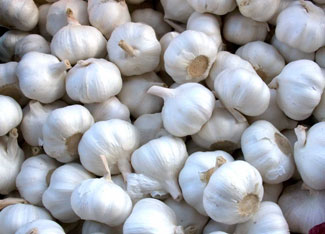 garlic-bulbs-325